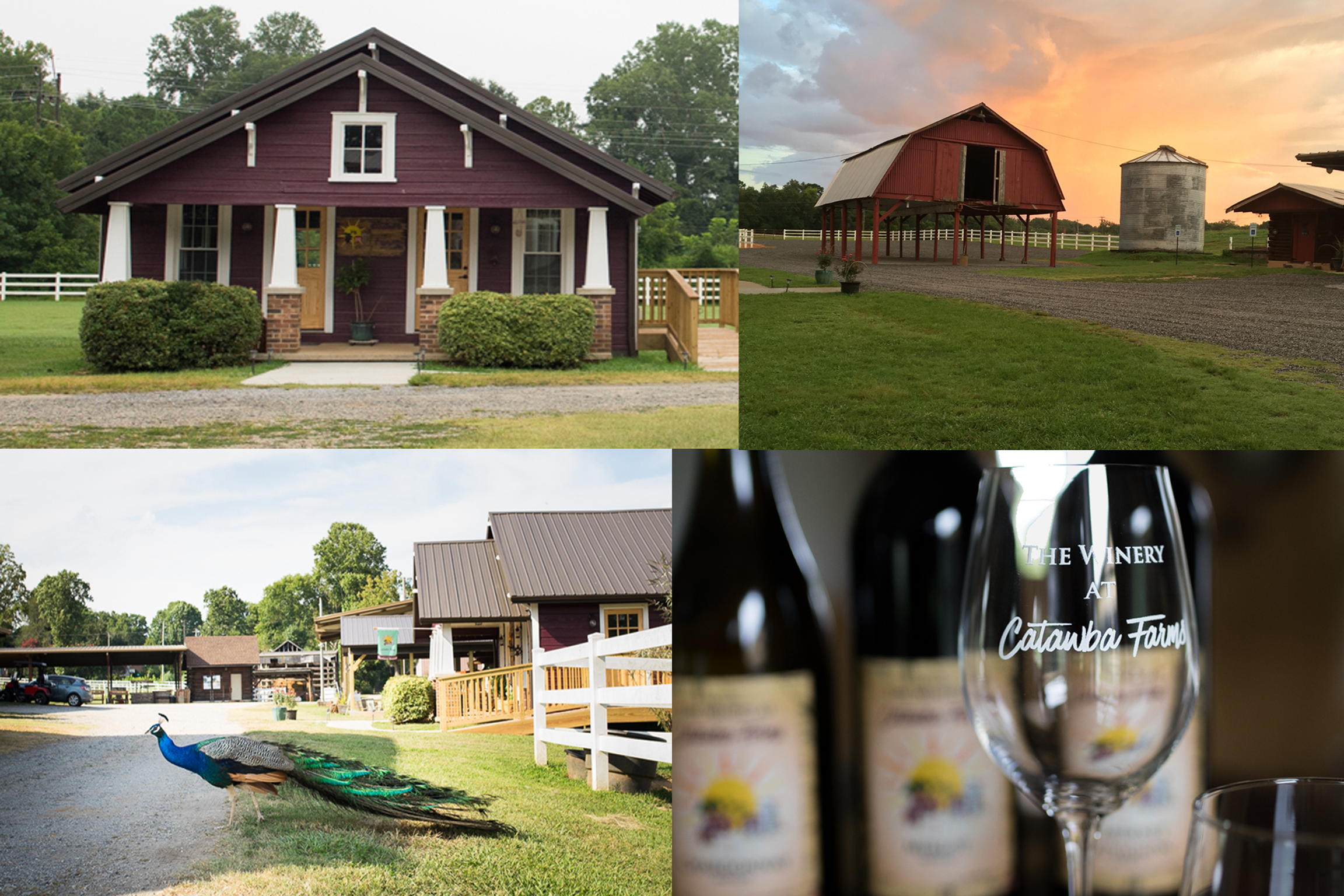 Vineyard & Winery Image Collage